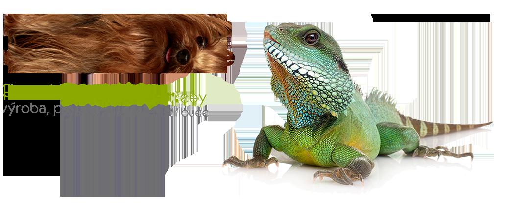lizard_de