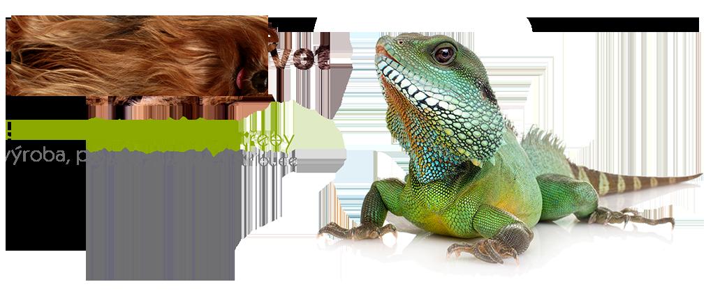 lizard_en
